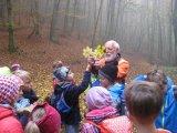 Schätze auf dem Waldboden
